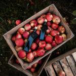ocet jabłkowy Sad Zaścianki